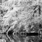 Am Pulower See | IR | 100 % | 100 mm | f/5,0 | 1/20 sec | ISO 100